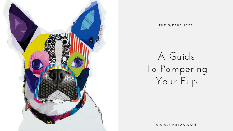 The Weekender - A Guide to Pampering Your Pup | Amman
